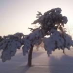Zakaj in kako nastane sneg?